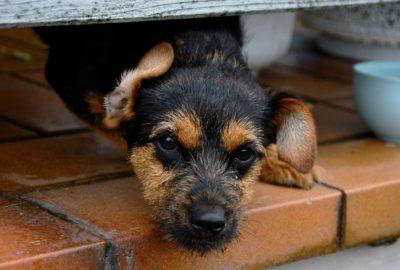 Fordele ved at finde hunden på et hundeinternat